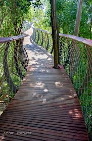 a canopy walkway in cape town allows you to walk above the trees