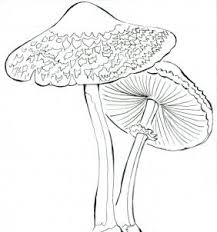 coloring pages lovely drawing of mushrooms coloring pages