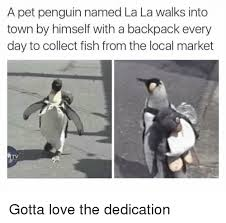 Funny Penguin Memes - 25 best memes about penguin penguin memes