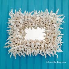 whimsical world of worm shells i love shelling