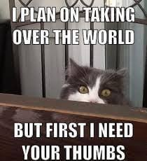 Crazy Cat Lady Memes - crazy cat lady meme a huge collection of funny cat lady pictures