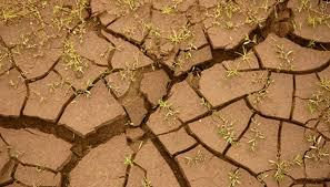 Garden Soil Types - osha soil types garden guides