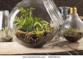 terrarium garden scene glass ball shape stock photo 519687850