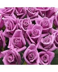 lavender roses 100 stem lavender roses