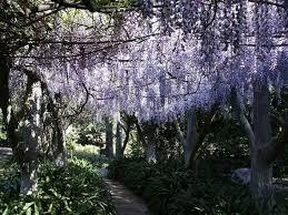Huntington Botanical Gardens Pasadena by 95 Best The Huntington Library Images On Pinterest Botanical