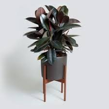 case study cylinder planter with wood stand hivemodern com