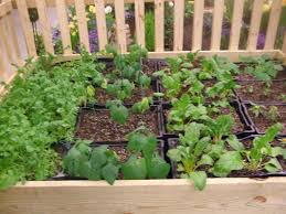 Raised Gardens You Can Make by How To Make A Milk Crate Garden Milk Crates Crates And Gardens