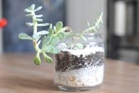 how to make a terrarium in 3 easy steps making lemonade