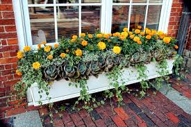 What To Plant In Window Flower Boxes - window boxes tips and advice new england today