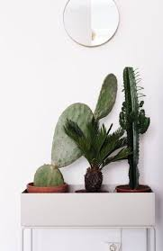 246 best plants vegetation images on pinterest house plants
