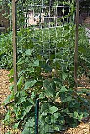 small vegetable garden design vegetable garden small herb