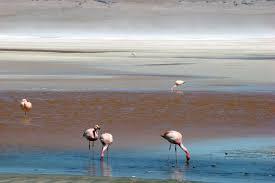lista blanca sri ecuador atacama desert and bolivia overland