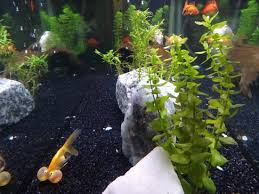 Asian Themed Fish Tank Decorations The Forum Chinese Restaurant Congleton Restaurant Reviews