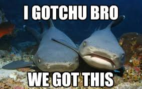 We Got This Meme - i gotchu bro we got this compassionate shark friend quickmeme