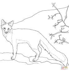 coloring arctic fox coloring pages