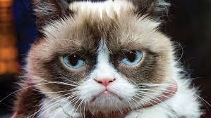 Grumpy Face Meme - multiple sclerosis grumpy cat living with ms