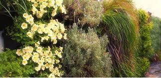 wall gardening brings u201chappiness and joy u201d