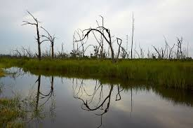 Wetland Resources Of Washington State by The Most Ambitious Environmental Lawsuit Ever The New York Times