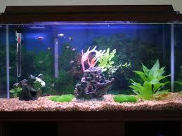 tropical fish tanks page 7