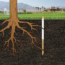 tree stakes tree watering stakes