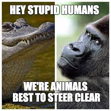 Stupid Animal Memes - zoo imgflip