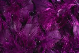 purple feather feather 16 purple feathers plum purple and
