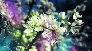 Flower Of Images - 100 nature pictures flowers beautiful waterfall wallpaper