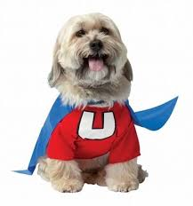 Dog Halloween Costumes Girls 104 Halloween Costumes Dogs Images