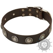 Comfortable Dog Collar Buy Fashion Dog Collar Nickel Plated Circles