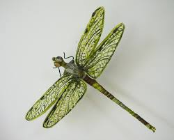 amazing dragonfly insect dragonfly facts images information