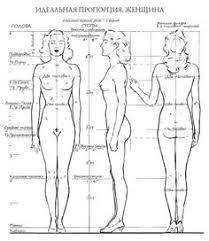 Female Body Anatomy Drawing How To Draw For Beginners Step By Step Human Figure Mi Tienda