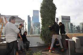 our 15 foot tree on an 18 story rooftop tree