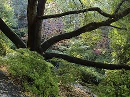Mt Lofty Botanic Gardens File Mount Lofty Botanic Garden Autumn4 Jpg Wikimedia Commons