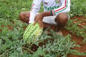 bentley watermelon design ideas from facebook u0027s farmers acres of data