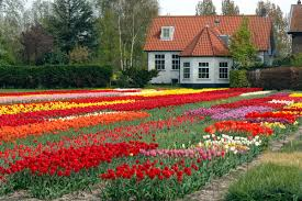 garden flower with house fresh flowers flowers pinterest