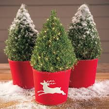 rosemary christmas tree christmas lights decoration