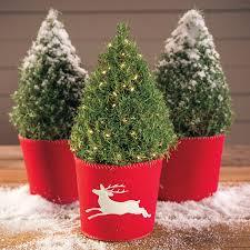 rosemary christmas tree christmas lights decoration