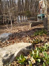 native plants of pa our pennsylvania native plant garden in early spring the