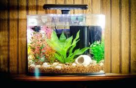 aquarium decoration ideas freshwater cool aquarium ideas fish tank decoration ideas for a more beautiful