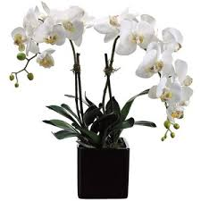 faux orchids white phalaenopsis 22 high faux orchids in square pot polyvore