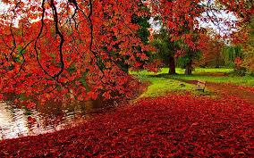 fall wallpaper 1920x1200 36906