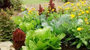 organic gardening 6 key principles to help your garden flourish