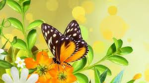 butterflies beautiful butterfly colorful delicate animals