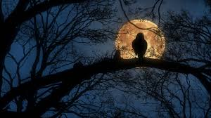 halloween raven background scary creepy crow or raven sitting on tree branch during a full