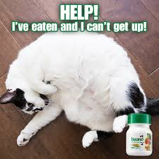 Food Coma Meme - avoid the awful food coma caused by bloating when you take beano