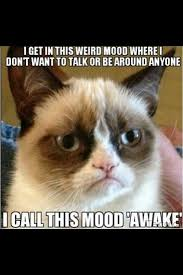 660 best grumpy cat images on pinterest funny kitties funny