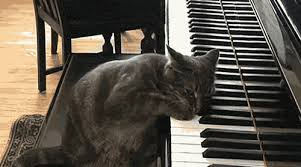 cat cute playing piano excited animated gif popkey