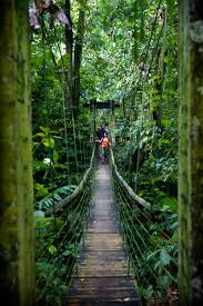 Under Canopy Rainforest by Photo Gallery For Finca Bellavista Treehouse Communityfinca Bellavista