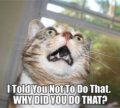 Bad Kitty Meme - why did you do that cat macros