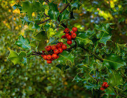 washington state native plants a quick and juicy guide to berries of the northwest the whole u